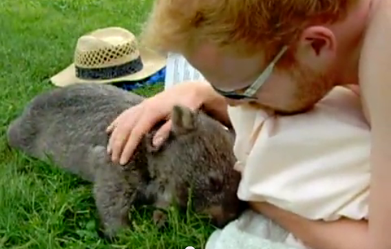 A human and a wombat, hanging out