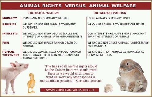 animal rights vs animal welfare