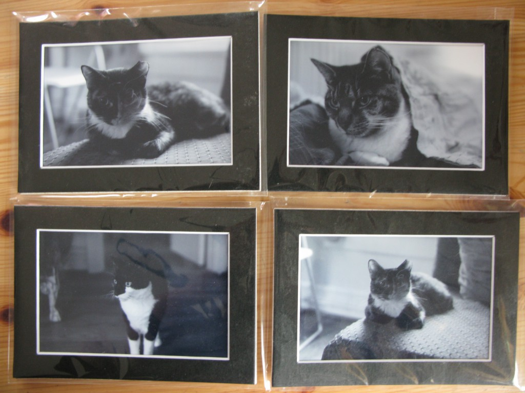Portraits of Snow, Sid and Zora by our dear friend Joe Fisher of the Dacha Project